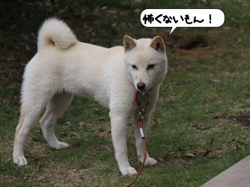 kowaku.jpg